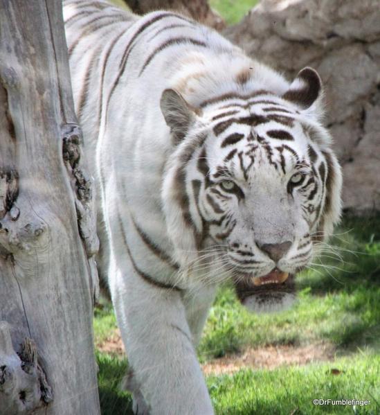 03 Al Ain Zoo (21)