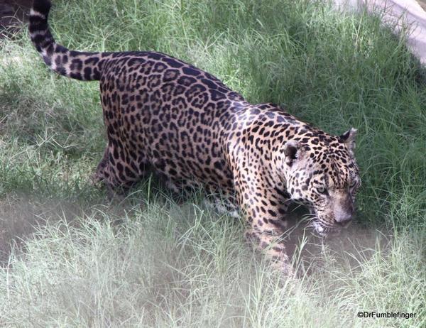 08 Al Ain Zoo (43)