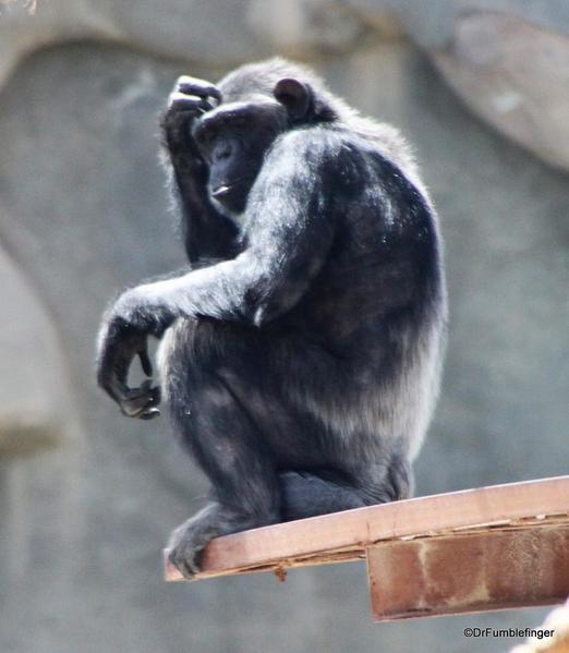 10 Al Ain Zoo (37)