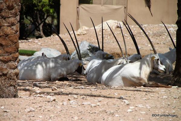 11 Al Ain Zoo (7)
