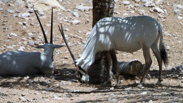 12 Al Ain Zoo (13)