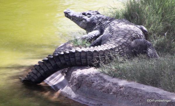 13 Al Ain Zoo (38)