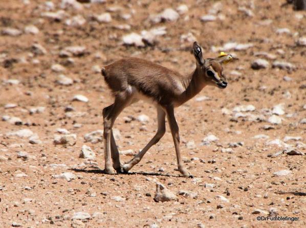 14 Al Ain Zoo (3)