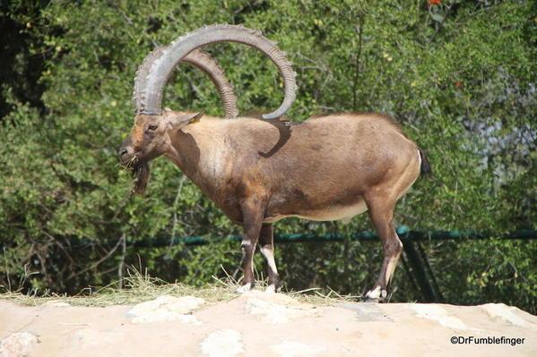15 Al Ain Zoo (62)