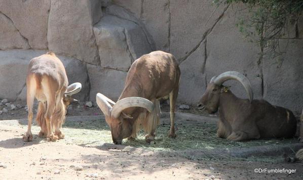 16 Al Ain Zoo (73)