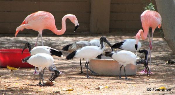 17 Al Ain Zoo (17)