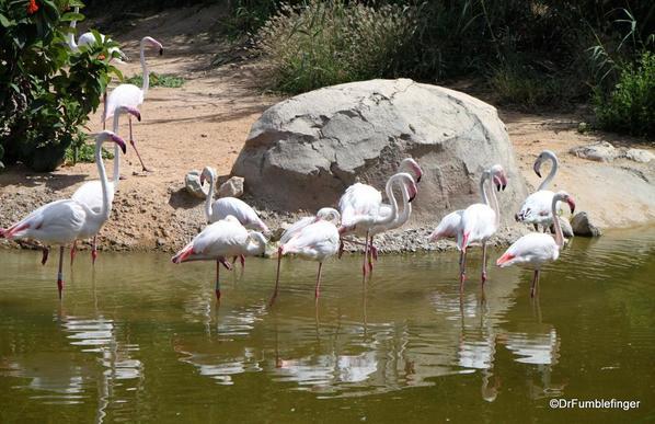 18 Al Ain Zoo (66)