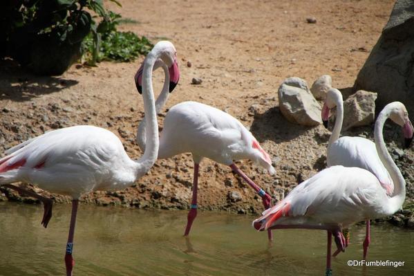 19 Al Ain Zoo (69)