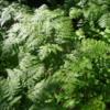 Foliage at Ouimet Canyon Trail