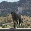 Wild Horse, Virginia City, Nevada