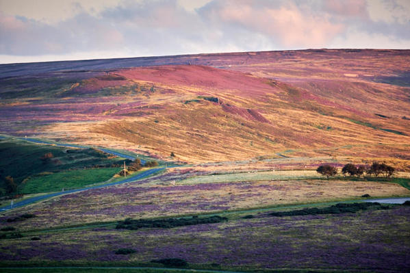 Hillside heather - Castleton Rigg.