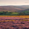 Moorland heather and hills.