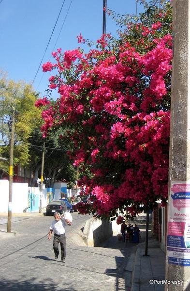 Xochimilco28