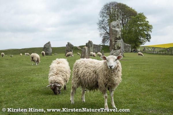 KHines_Stonehenge-5