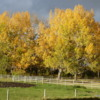 Fall colors near Cowboy Trail, Alberta