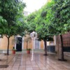 An Evening walk in Santa Cruz, Seville