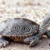 terrapin: Did the ill-fated terrapins come back to haunt the residents?