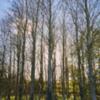 Tree copse.