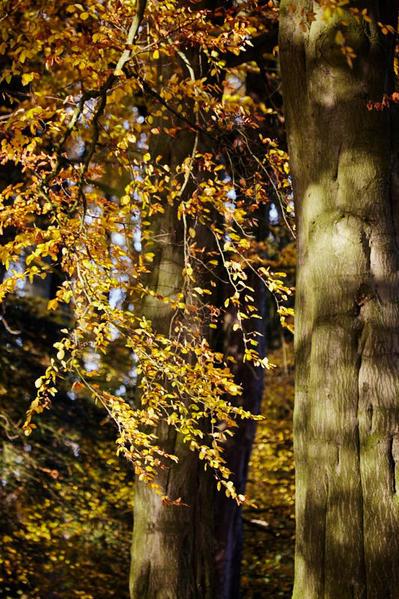 Tree foliage.