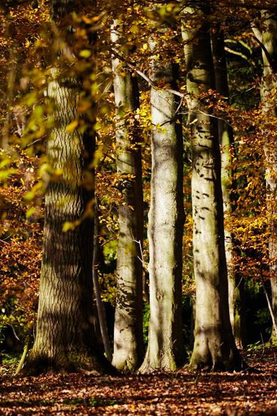 Trees and dappled light.
