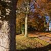 Leaf fall.