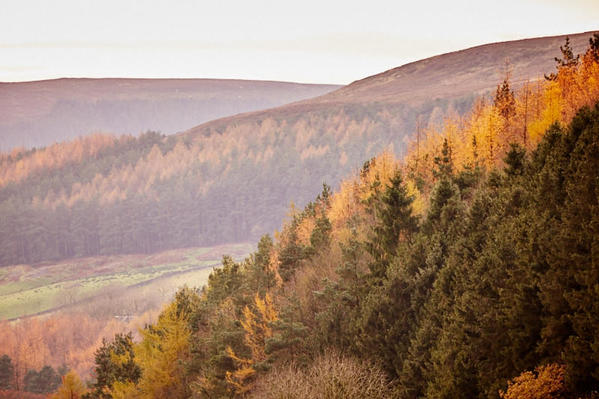 Hillside forestry - Clay bank.
