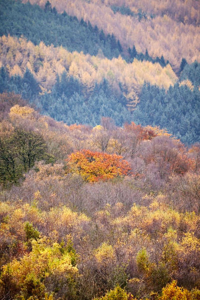 Trees and colour.
