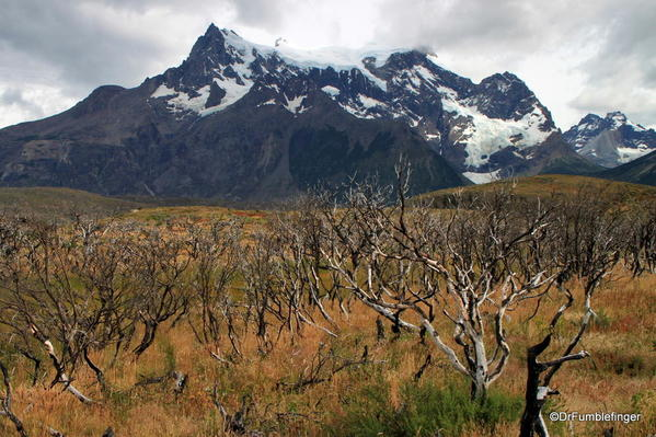 04 Paines Massif, Torres Del Paine (87)