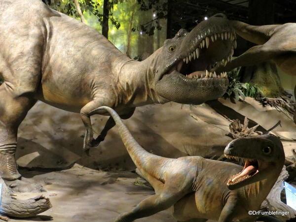 006 Royal Tyrrell Museum, Drumheller. Albertosaurus 69,000,000 yrs ago