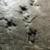 Dinosaur footprints, Royal Tyrrell Museum, Drumheller Dinosaur footprints