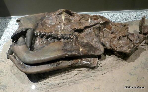 018 Royal Tyrrell Museum, Drumheller. Jeffrey Bridge Alberta. New Species