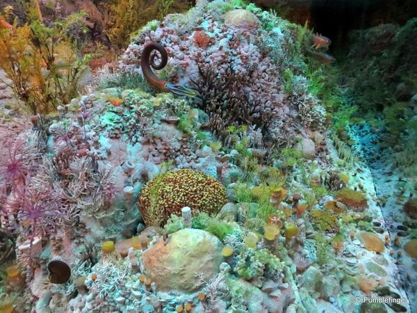 049 Royal Tyrrell Museum, Drumheller. Devonian Reef Predator