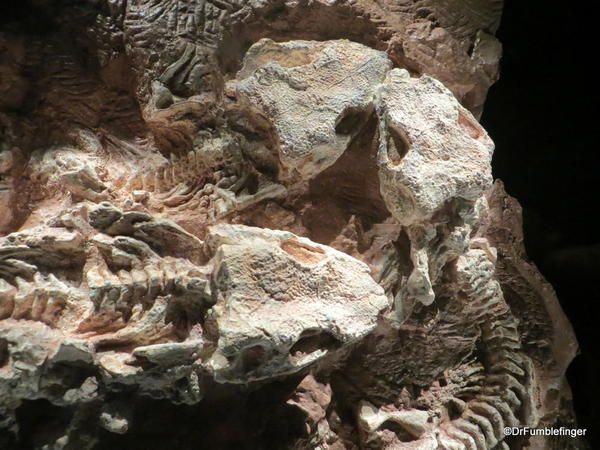 052 Royal Tyrrell Museum, Drumheller. Devonian Reef Predator