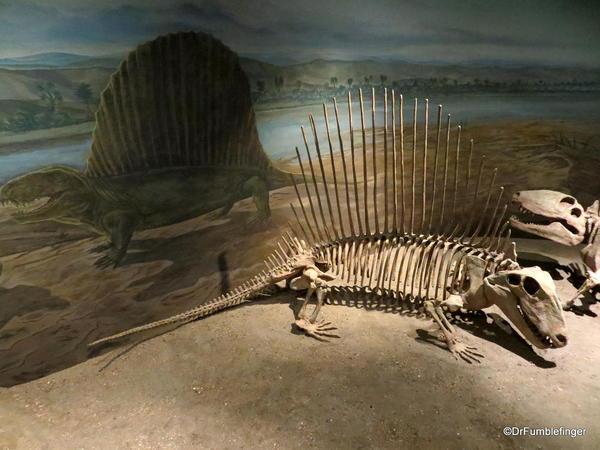 056 Royal Tyrrell Museum, Drumheller. Dimetrodon