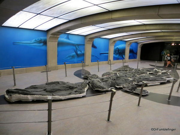 060 Royal Tyrrell Museum. Giant Lizard