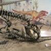 Dinosaur Hall,  Royal Tyrell Museum, Drumheller