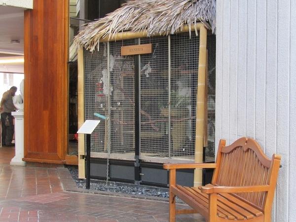 Hyatt-Regency-Waikiki-Macaws