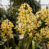 Orchids - Eric Young  3