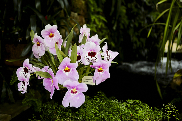 Orchids - Eric Young 1