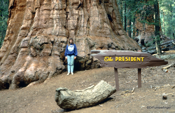 Sequoia National Park 6-90 022. Congress Trail.