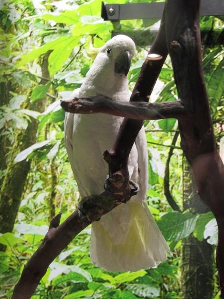 Odysea Bird 2
