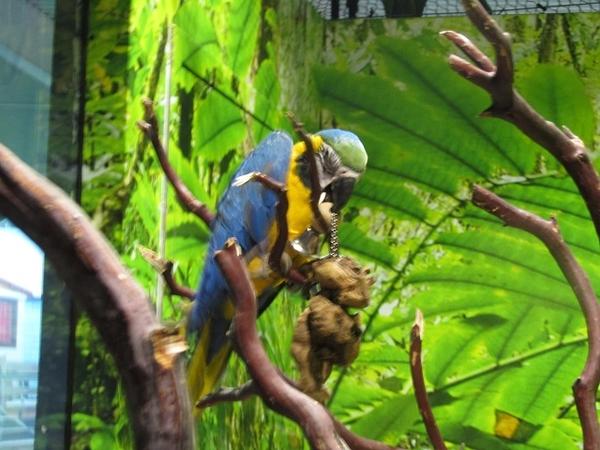 Odysea Bird 3