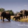 Zambezi-106