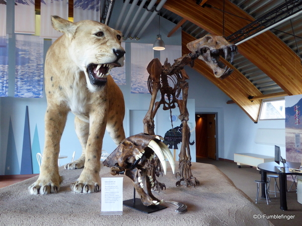 10 Yukon Beringia Center (23). American Scimitar Cat