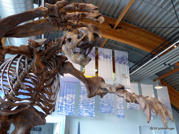 13 Yukon Beringia Center (27). Jefferson's Ground Sloth