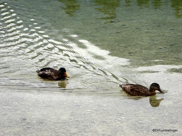 16 Lake Bohinj, Slovenia (36)