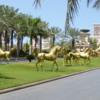 Horses of the Jumeirah al Qasr