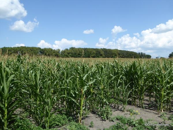 02 Prairie crops, Manitoba (1)