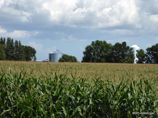 03 Prairie crops, Manitoba (4)