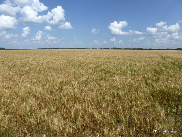 05 Prairie crops, Manitoba (8)